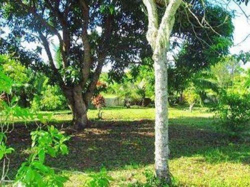 A vendre terrain 2335 M2 (Plateau des ananas) à Toahotu