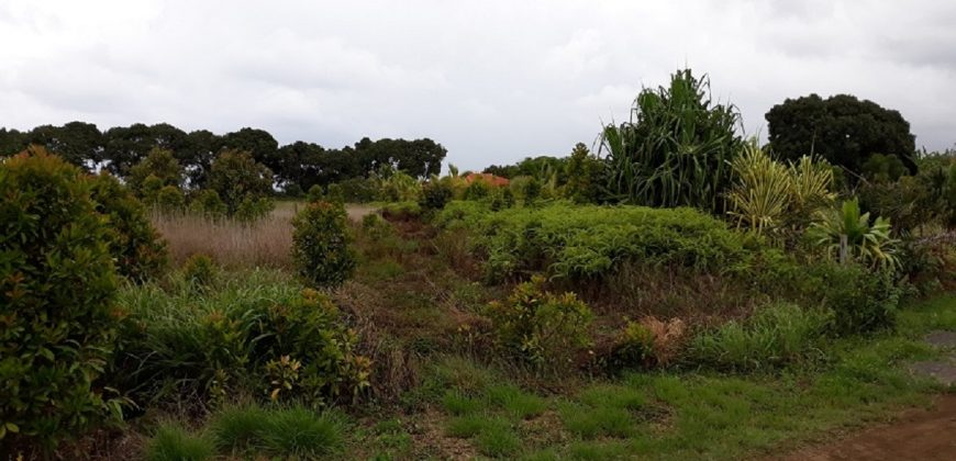 A vendre Terrain 2000 M2 à Toahotu – Plateau des Ananas