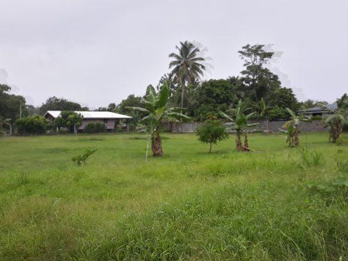 A vendre terrain de 1105M2 C/Mer à Toahotu