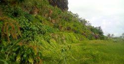 A vendre sur Bora Bora terrain de 4 682 m2