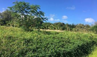 TARAVAO / A VENDRE SUPERBE TERRAIN 2500M2 VIABILISE