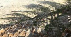 "MOOREA The "" PALM BEACH "" LUXURY"