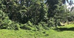 Terrain plat de 3560M2 – Moorea AFAREAITU